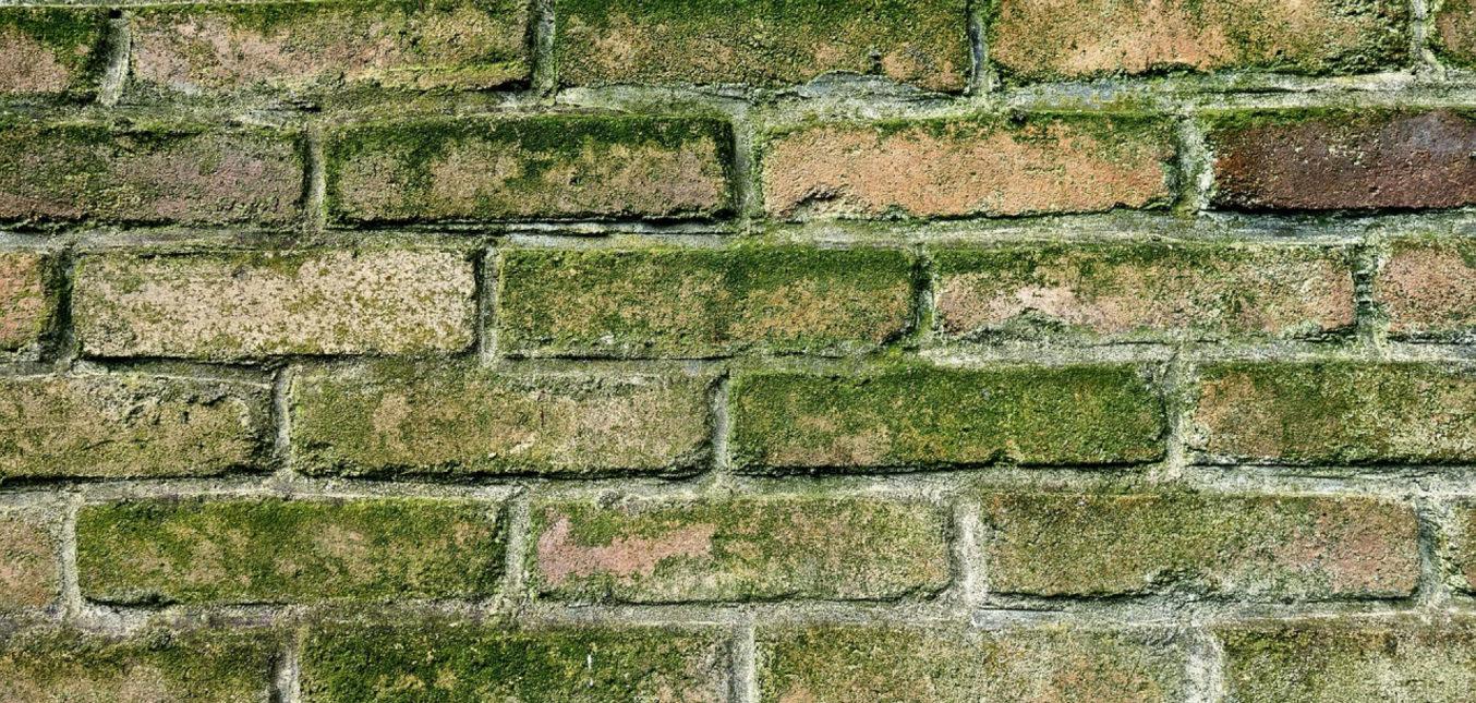 Comment nettoyer un mur moisi?