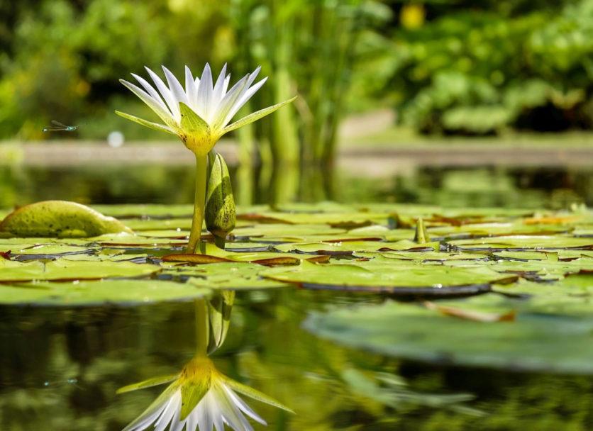 Le jardin idéal pour se reposer