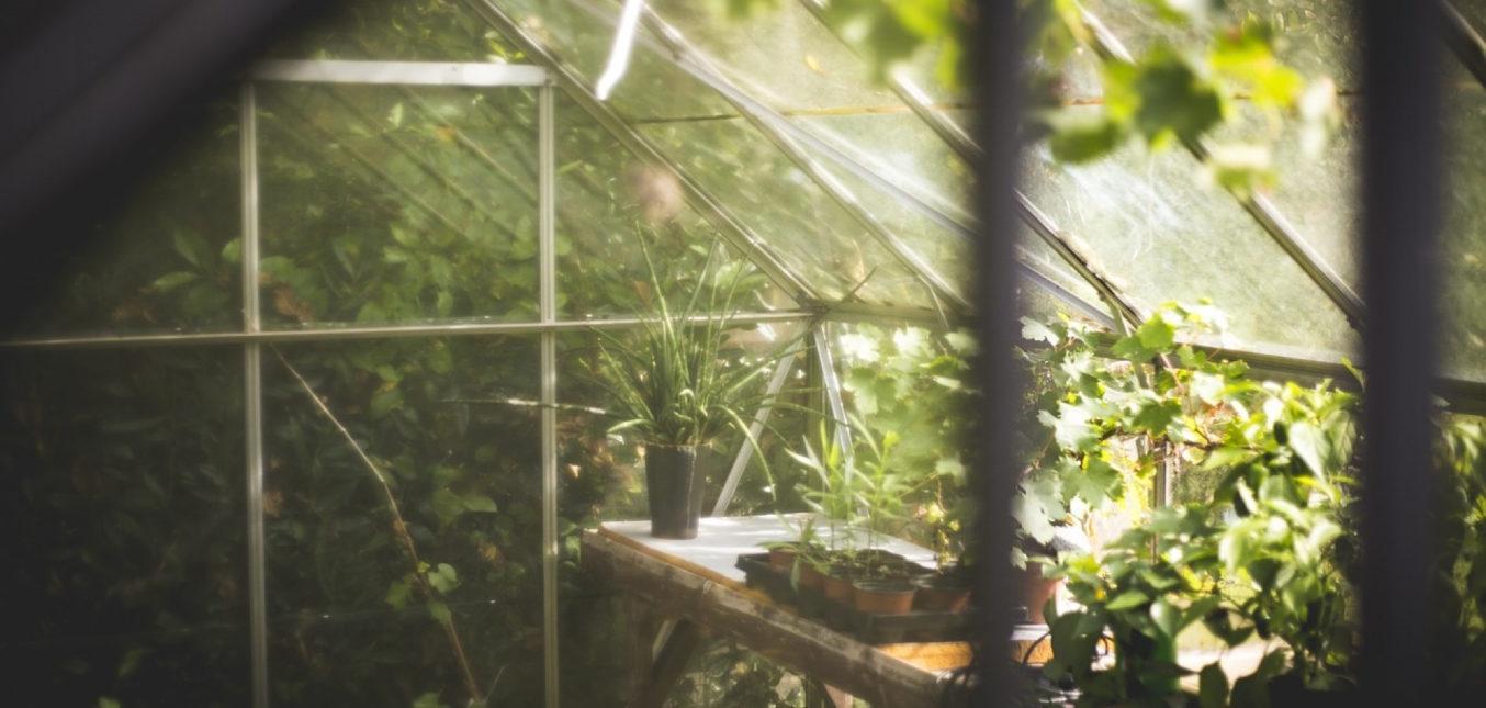 Pourquoi installer un éclairage pour vos plantes ?