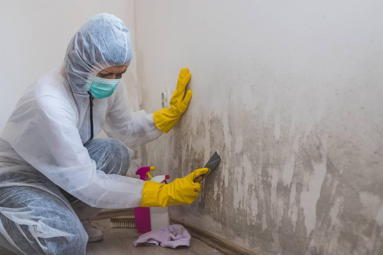 Moisissures sur les murs traitement de l'humidité
